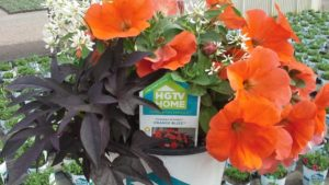 Decorating With Annuals the HGTV Way