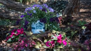 Why HGTV HOME™ Plant Collection?