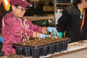 bailey-nurseries-veterans-workforce