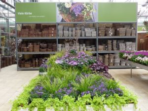 purple-plant-display-in-front-of-containers-eagle-and-frog