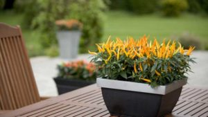 Ball Horticultural Expands Potted Plant Offerings With Purchase Of Ex-Plant