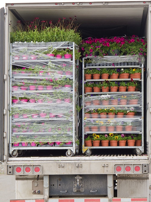 Whether you use carts, boxes or another method for shipping plants, there are a few key actions to take to make sure your plants arrive in excellent condition at their final destination. Image: iStockPhoto.com