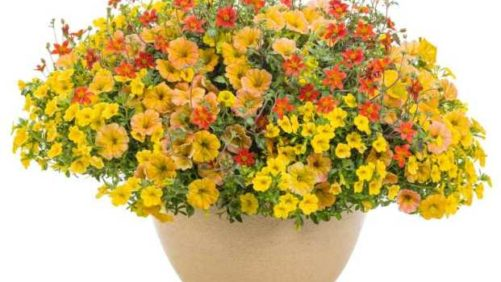 19 New Combos for Containers Big and Small