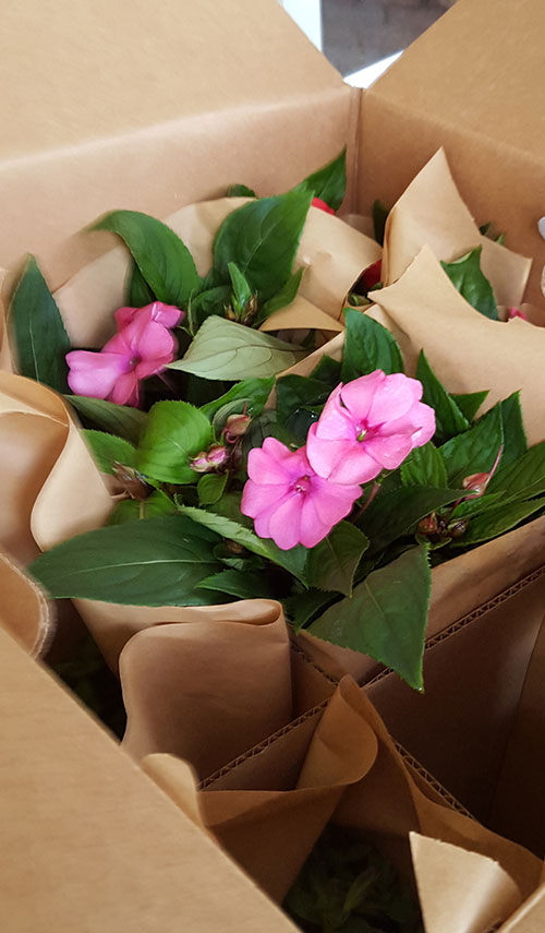 Packing sleeved material in boxes can protect blooming plants shipped in pots while they are at their most fragile stage.
