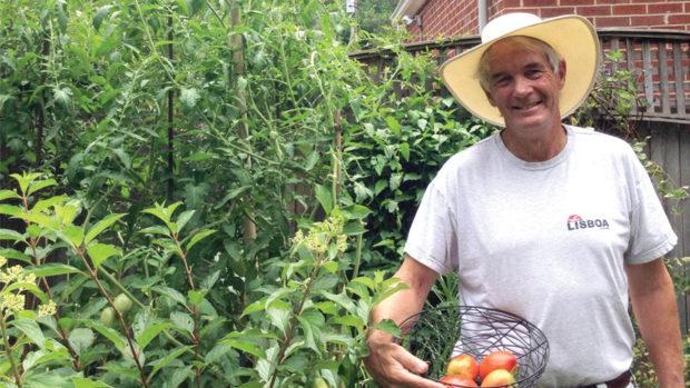Allan Armitage San Marzano tomato plant feature