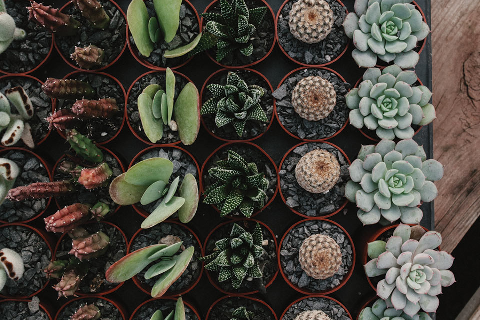 cactus-and-succulent-assortment-at-arizonaeast