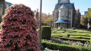 Princettia Euphorbias Charm Vacationers at Disney Resorts