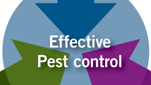 Prevention and Early Intervention:  The Keys to Biocontrol Success in Greenhouse Crops