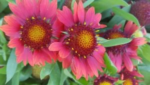 2016 Pike Creek Horticulture Center Field Trials Results
