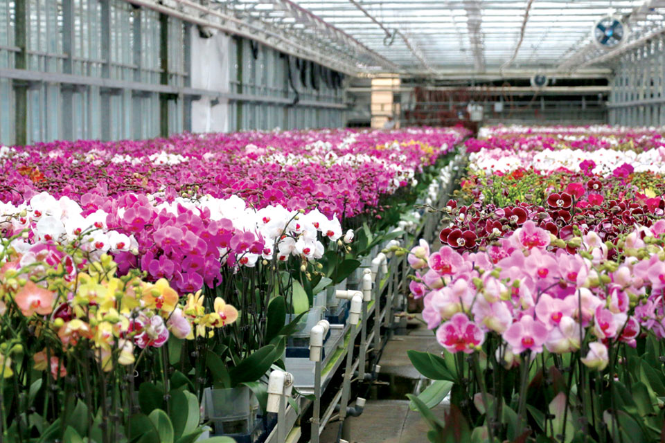 Greenhouse full of orchids