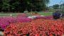 Selecta Sponsor bed at Raker trial gardens
