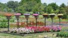 Reiman Gardens field trials