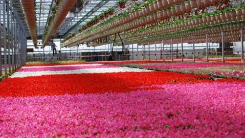 Dan and Jerry's Greenhouse Buys Iowa-Based DeJong Greenhouses