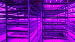 Emerald Coast Growers Seed Room