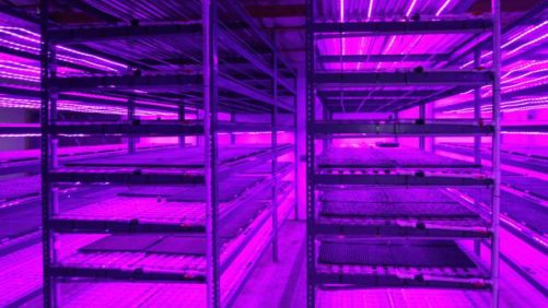 Emerald Coast Growers Adds New Seed House to Increase Production Efficiency