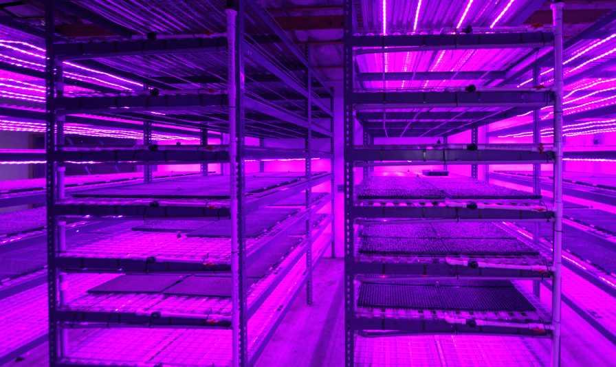 Emerald Coast Growers Seed Room