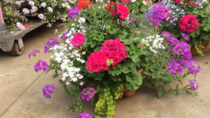 Geranium Combos feature