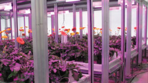 How Lighting Companies Are Tackling Plant Quality