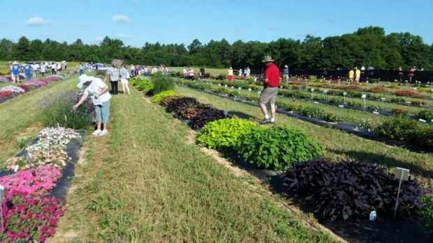 Overton Horticulture Field Day at Texas A&M University