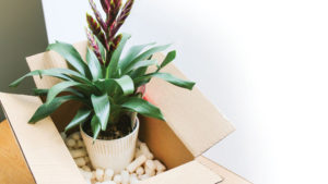 Plant in box for Amazon feature image