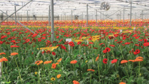 Using Remote Sensing to Optimize IPM in Greenhouses