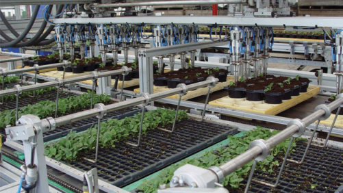 How to Find a Greenhouse Transplanter for Every Grower's Budget
