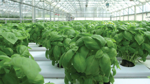 How You Can Embrace Greenhouse Food Production With Confidence