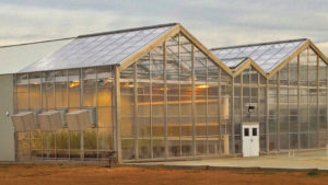 7 Factors That Can Determine the Cost of Building a New Greenhouse