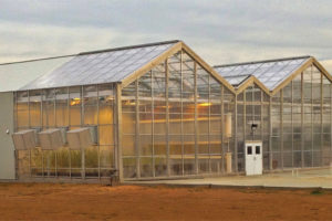 CS3 Greenhouse (Stuppy)