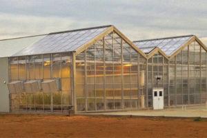 Cs3 Greenhouse Stuppy