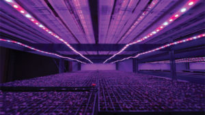 Emerald Coast Growers Seed RoomTight feature