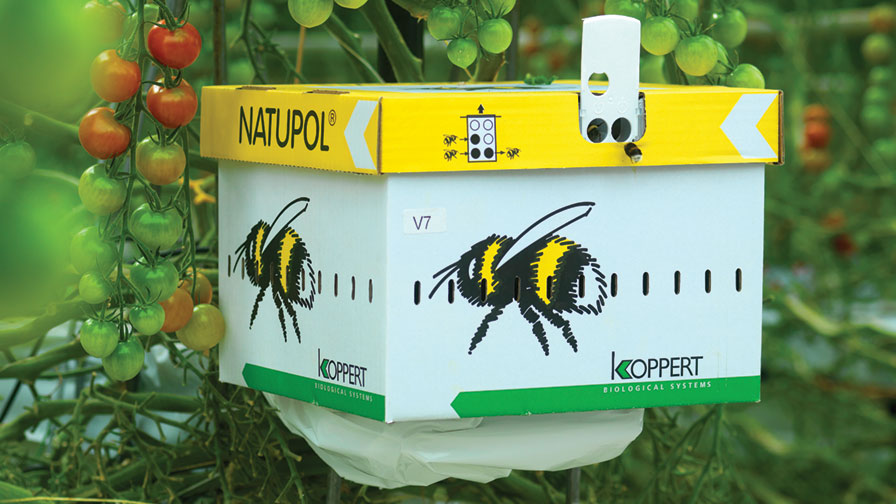 Using Bees in the Greenhouse for Natural Pollination