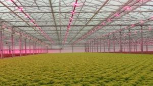 Lemnis Oreon, EnviroTech Cultivation Solutions to Partner on LED Distribution