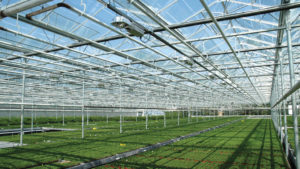 Venlo Greenhouse (Westbrook Greenhouse Systems Ltd.)