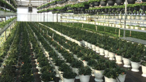 How Suppliers Are Addressing Remote Monitoring Needs for Greenhouse Growers