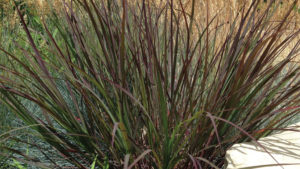 Kelly Norris: Diversity is the Key to Growing the Ornamental Grass Market