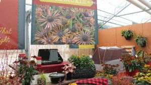 California Spring Trials Day Two – Highlights and New Plants From Speedling, Pacific Plug & Liner, and Benary