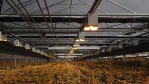 GGS Cannabis Production