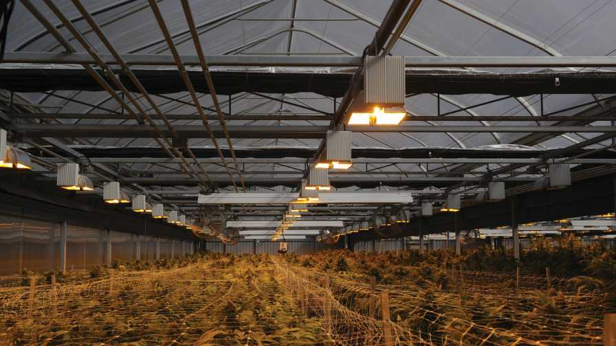 GGS Cannabis in Canada Production