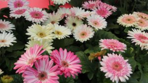 Flower Power Move: Florist Holland and HilverdaKooij Merge