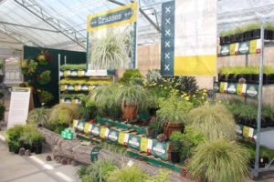 Pacific Plug and Liner Highlights Camp Perennial, Grower Solutions; Speedling Presents New Offerings from 5 Companies