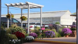 California Spring Trials Day Five: Notable New Plant Varieties from Ball Horticultural Company and GroLink