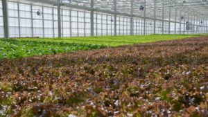 Hydroponics Michigan State Web