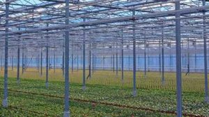How to Trial a New Product Before You Use It in Your Greenhouse