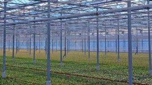 Kemin Horticulture Trial