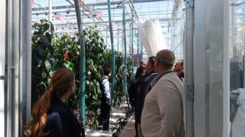 LumiGrow's Latest Lighting Research Highlighted in Grower Event, Upcoming Webinar