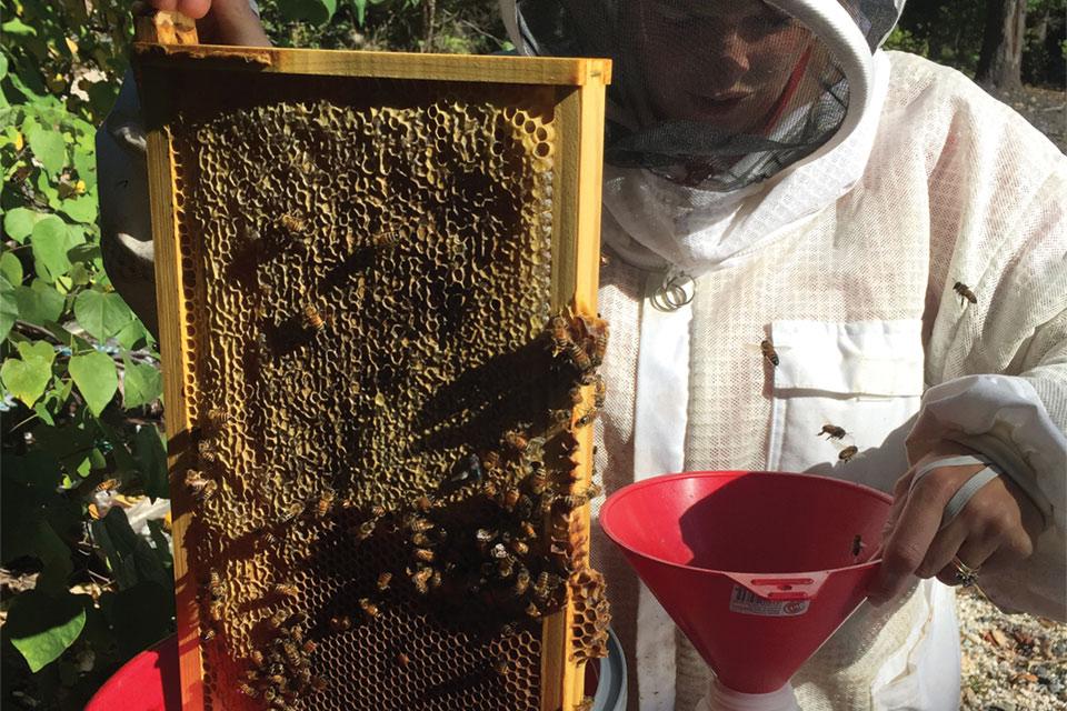 Beehives at Bell Nursery