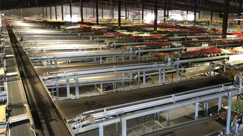 New Greenhouse Conveyors Help Automation Become More Functional