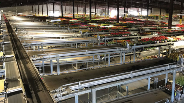 Bellpark Horticulture and Visser Shipping System