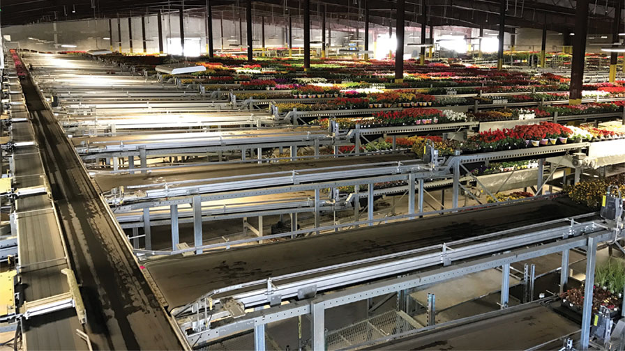 Bellpark Horticulture and Visser Shipping System transporting floral products